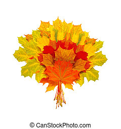 beautiful colorful autumn leaves isolated on white