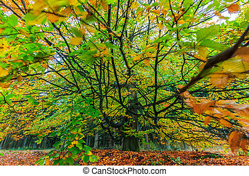 Beautiful colorful autumn tree in a forest