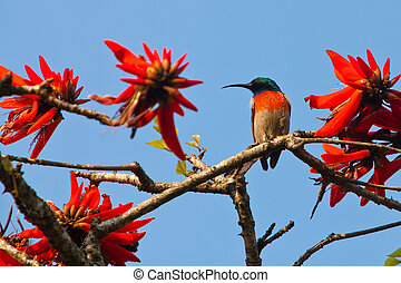 Beautiful colorful bird sitting in a tree