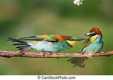 beautiful colorful birds conflict on a branch