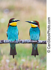 Beautiful colorful birds on a branch