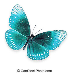 Beautiful colorful butterfly - Blue butterfly on white...