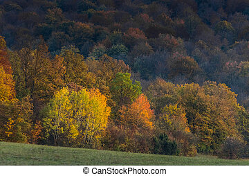 beautiful colorful colors in the forest in the autumn sun