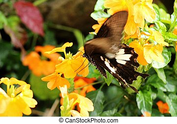 Beautiful colorful flowers with butterfly in garden