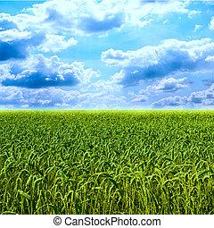 Beautiful colorful green wheat field