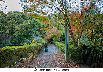 Beautiful colorful leaves tree in Japanese garden