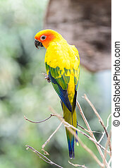 Beautiful colorful parrot on wood branch