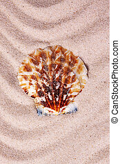 Beautiful colorful seashell on wavy sand background. Close-up