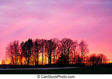 beautiful colorful sunset behind the trees without leaves in spring