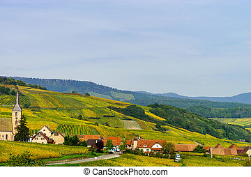 Beautiful colorful vineyards in Alsace, autumn