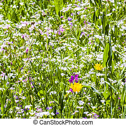 Colorful wildflowers on meadow