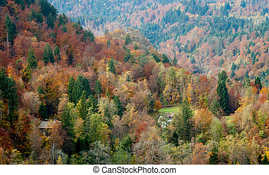 beautiful colourful autumn forest