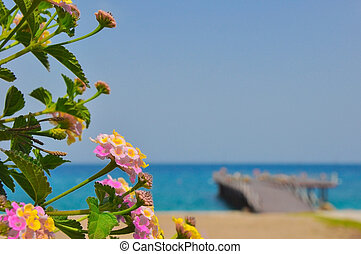 beautiful colourful flowers at a background the sea and the mooring. Blurred summer background