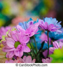 Beautiful colourful flowers