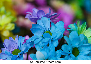 Beautiful colourful flowers