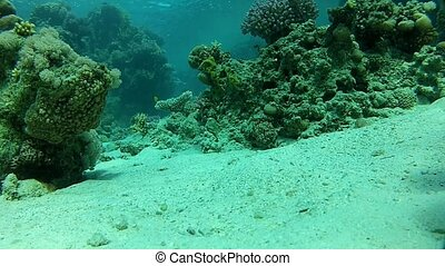 Beautiful coral fish.
