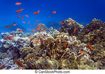 Beautiful coral garden in Red Sea. Egypt
