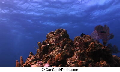 Beautiful coral on a background of blue sea.