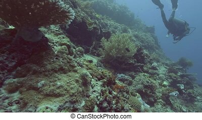 Beautiful coral reef, fish and scuba diver swimming...