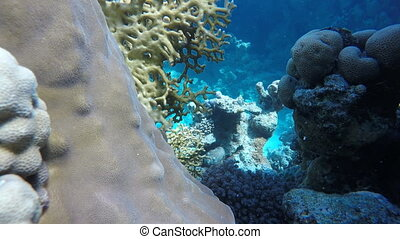 Beautiful coral reef. Fish, Underwa
