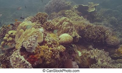 Beautiful coral reef on sea bottom and fish swimming in...