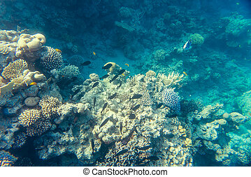 beautiful coral reef under water in red sea