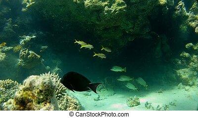 Beautiful coral reef. Underwater wo