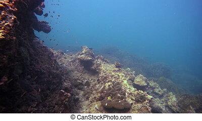 Beautiful corals at a depth of 5 meters. Thailand, Phuket