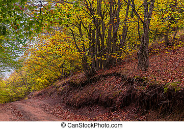 Beautiful countryside mountain road in autumn forest