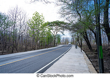 countryside road surrounded by trees