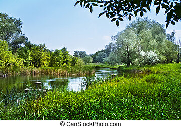 Beautiful countryside scene - Forest clearing in beautiful...