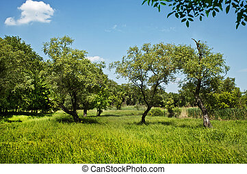 Beautiful countryside scene