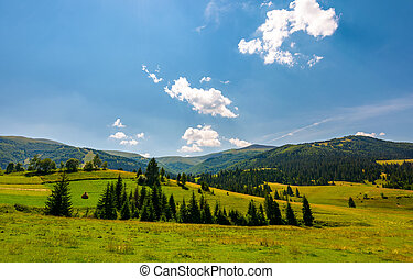 beautiful countryside summer landscape. spruce trees on a...
