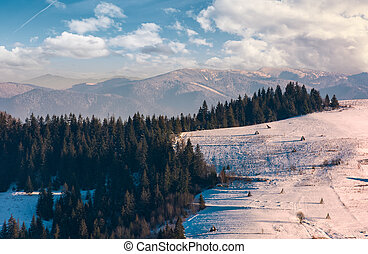 beautiful countryside with conifer forest. lovely landscape...