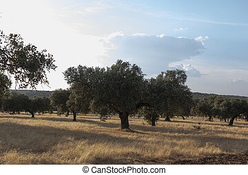 Beautiful couples, fields and landscapes of the Cordoba mountains in Spain. Photograph taken in the month of July.