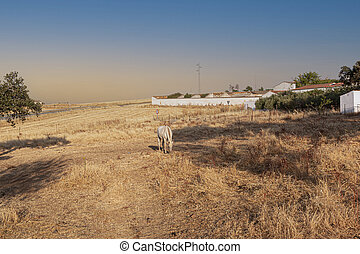 Beautiful couples, fields and landscapes of the Cordoba mountains in Spain. Photograph taken in the month of July. Horse in the field