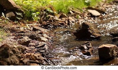 beautiful Creek with pure crystal water in a forest