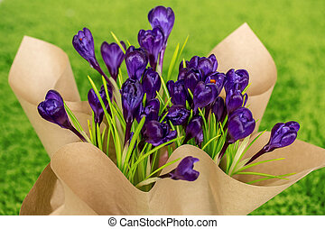 Beautiful crocuses. A bouquet of flowers for March 8, or Valentine's day
