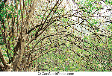 Beautiful curved branches tree