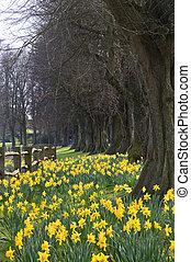 Beautiful daffodil covered walkway through forest scene -...