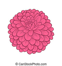 beautiful Dahlia flower in a hand-painted graphic style