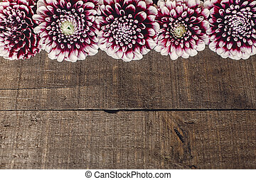 beautiful dahlias on rustic wooden background flat lay. purple autumn flowers top view, seasonal greetings. floral greeting card with space for text.