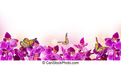Beautiful daisies and butterfly