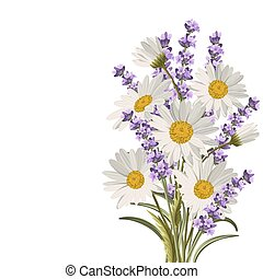 Beautiful daisies and lavender flowers