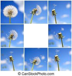 Beautiful dandelion collage
