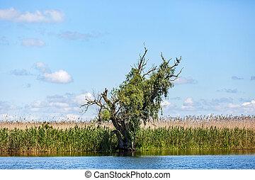 Beautiful Danube Delta