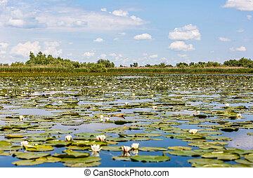 Beautiful Danube Delta - Beautiful landscape photo of Danube...