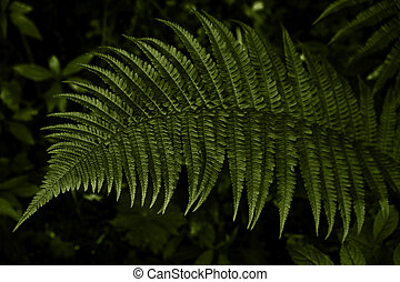 Beautiful dark fern leaf in trend color of the year