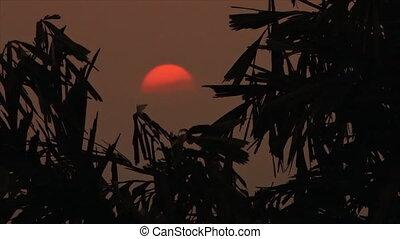 Beautiful dawn seen through the branches - A steady, medium...