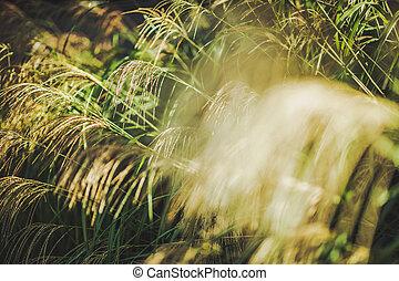 Beautiful Decorative Garden Grasses